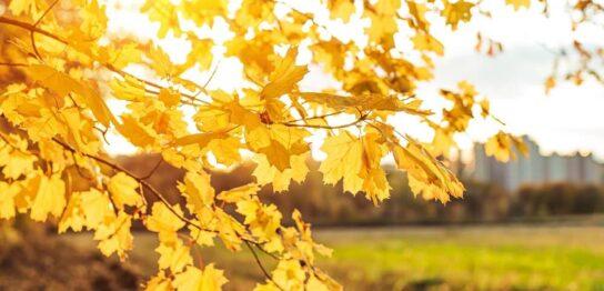 秋も紫外線に要注意! 冷え・乾燥でシミができやすいって本当?